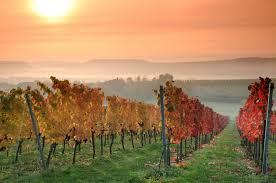 traverse-city-vineyards Event